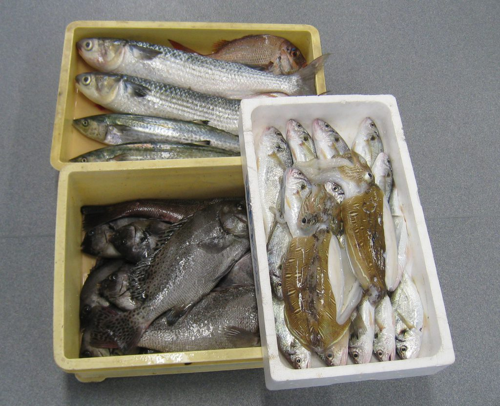 これからさばく魚